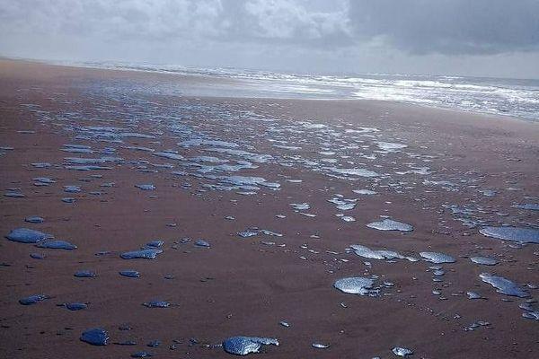 Mancha de óleo atinge 39 praias do litoral nordestino. A praia de Ponta dos Mangues, em Sergipe, foi uma delas. Crédito: Divulgação | Brenda Dantas