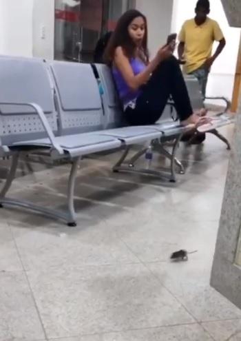 Internautas relataram que um rato ficou circulando na UPA de Guarapari. Crédito: Reprodução/ Vídeo internauta