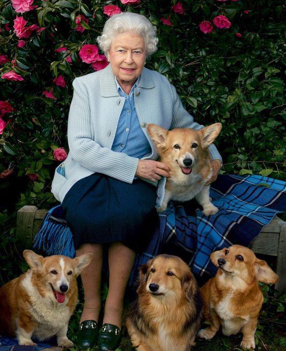 Palácio de Buckingham terá exposição para os animais da família real. Na foto: a rainha com seus corgis. Crédito: Pinterest