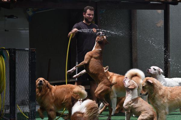 Pet Fit, uma creche e hotel para cães. Crédito: Ricardo Medeiros