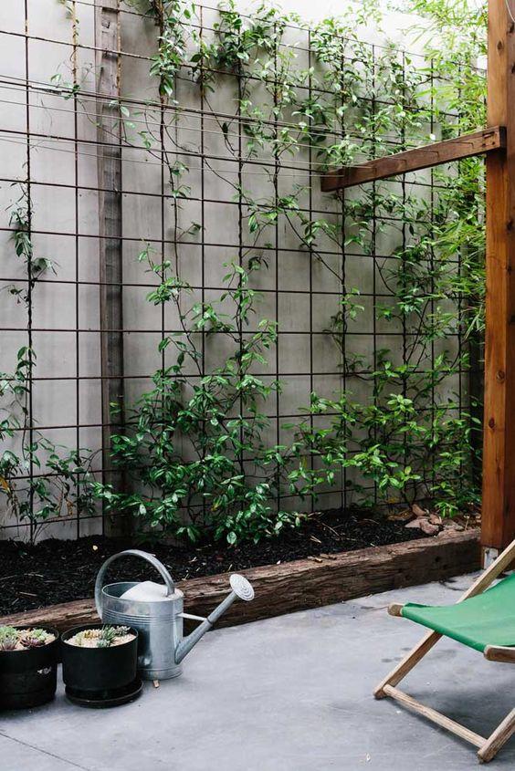 Veja dicas de como plantar trepadeiras em casa. Crédito: Pinterest
