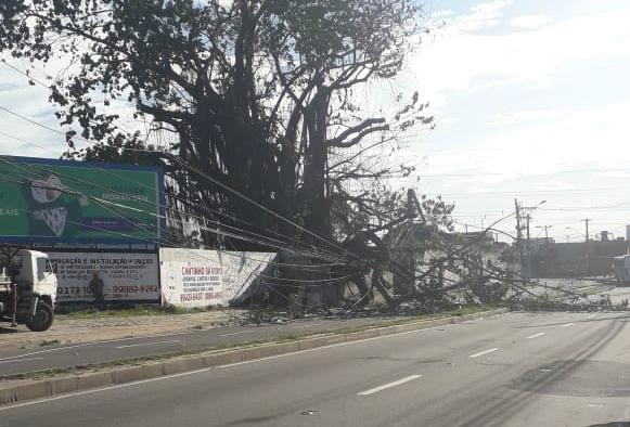 Queda de árvore interdita a Rodovia Norte e Sul, na Serra. Crédito: Internauta | A Gazeta