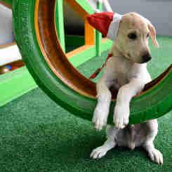 Data: 17/12/2019 - ES - Vitória - Esse cãozinho aguarda por adoção na Ong Patinhas Carentes - Editoria: Cidades - Foto: Carlos Alberto Silva - GZ