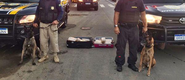 Polícia apreende mais de 30 kgs de maconha em ônibus na BR 101. Crédito: Divulgação/PRF