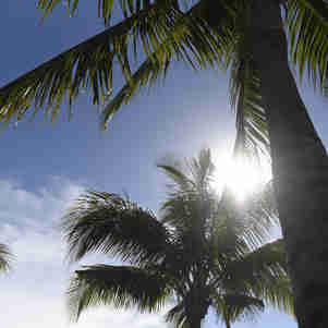 Data: 20/12/2019 - ES - Vitória - Sol entre coqueiros na Praça do Papa. Dia de calor na Grande Vitória - Editoria: CIdades - Foto: Vitor Jubini - GZ