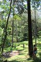 Grupo praticando Terapia Florestal em São Paulo