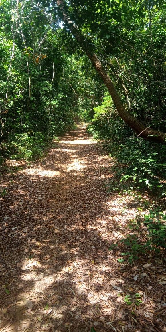 Ilha do Gambá: com trilha, local é ideal para caminhadas e passeios de bicicleta. Crédito: Assessoria Piúma