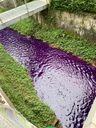 Rio aparece com coloração roxa em Santa Maria de Jetibá. Crédito: Internauta
