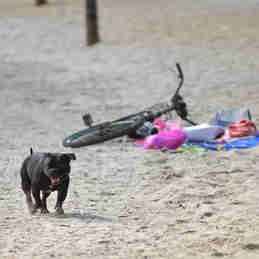 Data: 16/01/2020 - ES - Vitória - Cachorro sem coleira na Praia de Camburi, em Vitória - Editoria: Cidades - Fernando Madeira - GZ