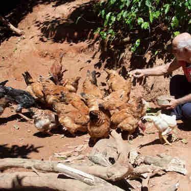 Benedito Teixeira Fraga, de 65 anos, ou seu Bino, vive em meio à natureza no Mestre Álvaro.
