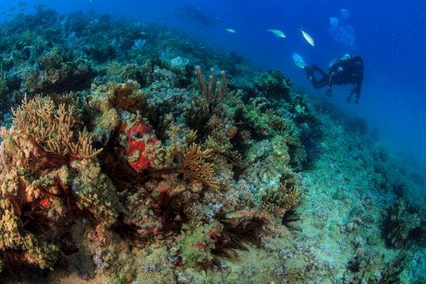 Exemplo de coral no litoral brasileiro. Crédito: Projeto Coral Vivo