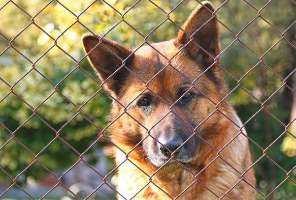 Projeto veta uso de cães para segurança patrimonial. Crédito: Katerina Vulcova/ Pixabay