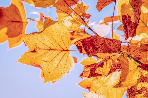 Outono deve ser de temperaturas amenas e pouca chuva. Crédito: @Couler   Pixabay