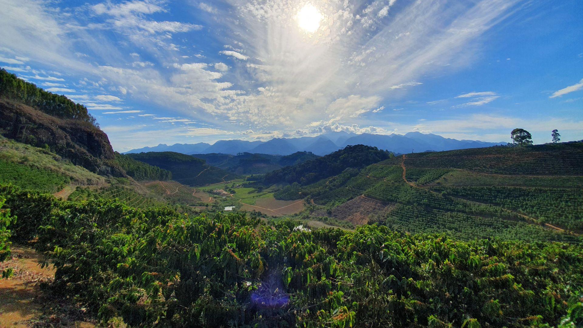 Cultivo de café conilon no Sítio Terra Alta, na Região do Caparaó