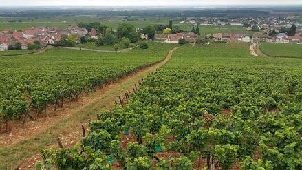 Vinhedo Clos des Lambrays, na Borgonha