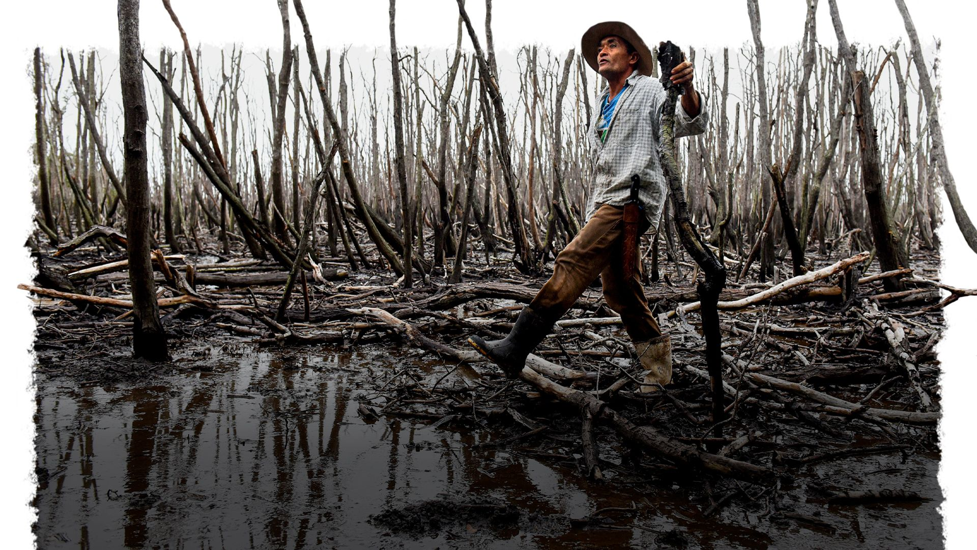 Pedro Ribeiro, presidente da Associação de Moradores e Catadores de Caranguejo do Distrito de Nativo, caminha sobre o mangue morto, em São Mateus