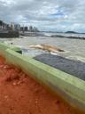 A baleia jubarte encontra-se encalhada na Pedra do Siribeira, em Guarapari. Crédito: PMG/Divulgação
