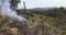 Em Pratinha, o incêndio também atingiu uma plantação de eucaliptos. Crédito: Divulgação/ Bombeiros