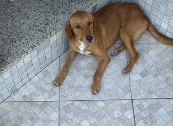 Animal foi arrastado até a morte em Jaguaré