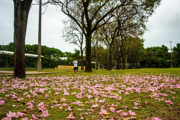 Parque Pedra da Cebola, Mata da Praia a2a24v4oq
