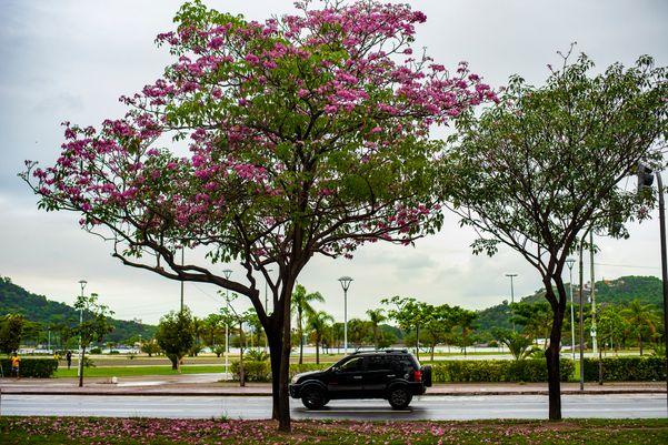 Avenida Nossa Senhora dos Navegantes, Enseada do Suá bd6e8pj