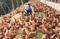 Jediner Delpupo da Cunha, 37 anos, em meio a galinhas que produzem ovos no sistema caipira. Crédito: ovocaipiraladaroca/Instagram