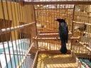Catatau, também conhecido como pixoxó, ave que está na Lista Nacional Oficial de Espécies da Fauna Ameaçadas de Extinção.