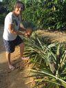 Edileuza Wagner colheu o abacaxi na casa da mãe dela, na comunidade São João do Estivado, em Jaguaré