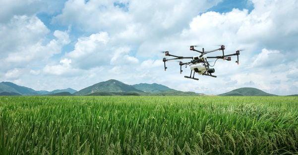 Aliado do agronegócio, drone é utilizado em plantações