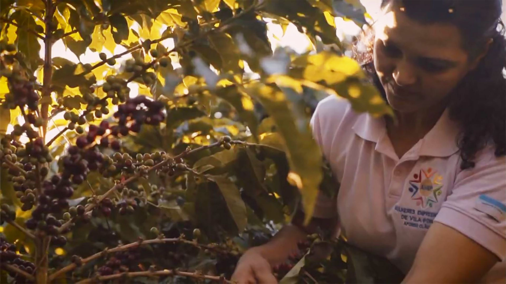 Associação de mulheres trabalha com café