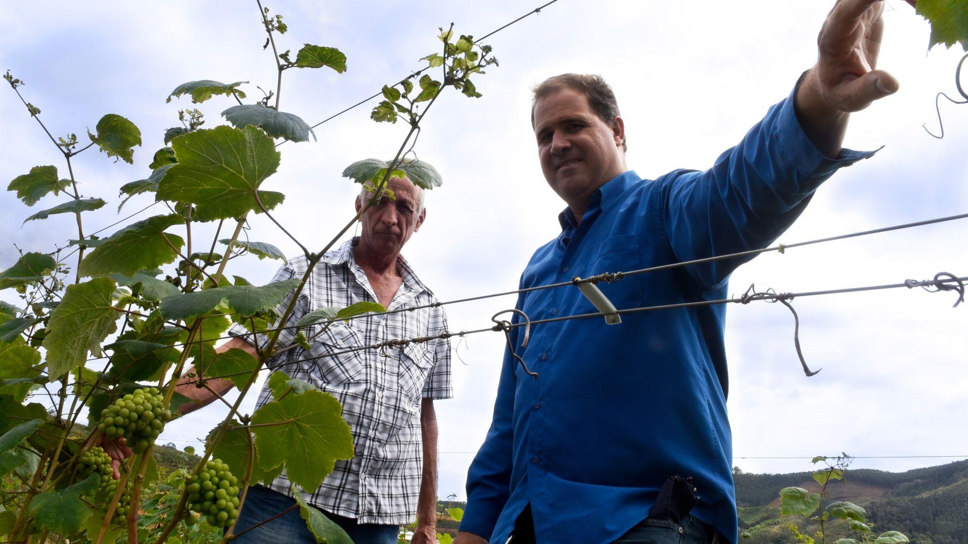 Vinícola Taboca. Produção de vinho em Santa Teresa. Primeira vinícola a elaborar vinho fino, o Tabocas (essa foto foi tratada)