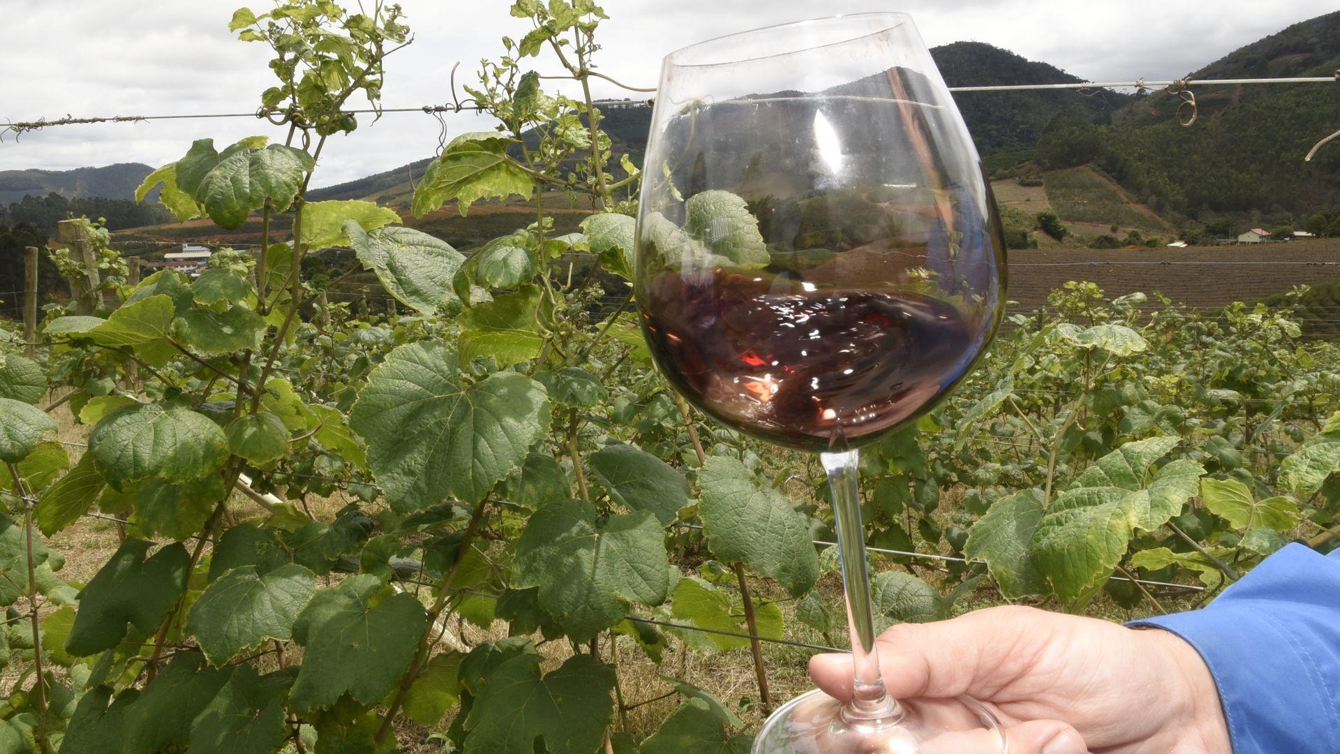 Montanhas em Santa Teresa esconde o segredo do melhor vinho tinto seco do país