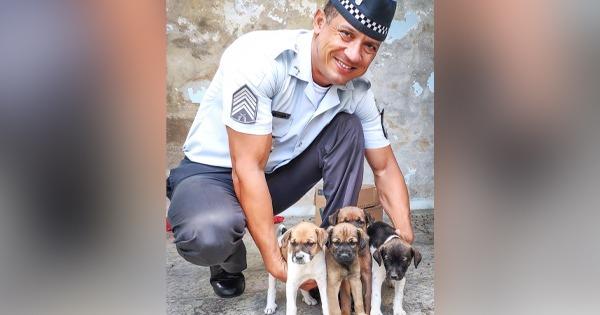 Os animais foram deixados em uma caixa e enquanto aguardam novos donos, são alimentados pelos policiais