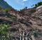 Plantões de café foram perdidas na comunidade de Sombra da Tarde. Crédito: Joyce Pena
