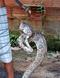 Cobra apareceu no quintal de moradora de Mimoso do Sul . Crédito: Leitor/ A Gazeta