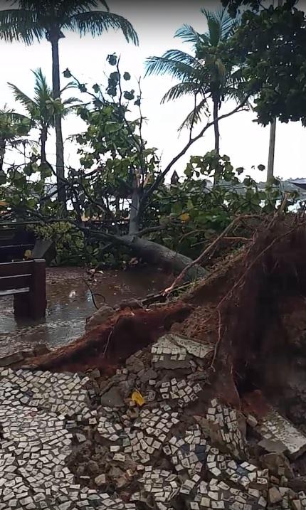 Árvore da Curva da Jurema, em Vitória, é derrubada por ventos de até 70 km/h de temporal