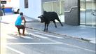 Homem tenta laçar o touro em Linhares