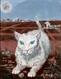 Gato, Candido Portinari, Foto Projeto Portinari