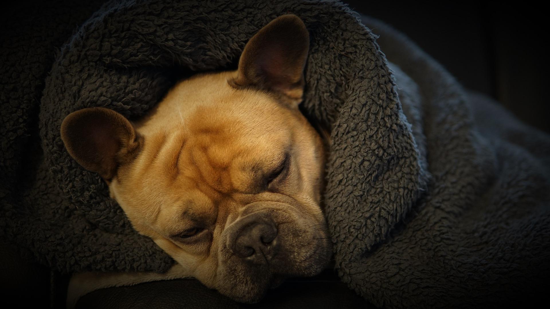 Pets também precisam de cuidados no frio. Crédito: Reprodução/Pixabay