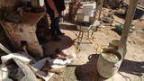 Na residência do autônomo também foram encontrados miúdos de boi que eram comercializados de forma irregular