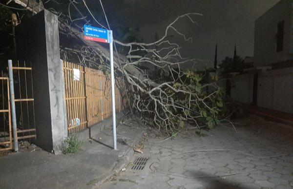 Queda de árvore na Rua Demóclito Silva, na Mata da Praia. Crédito: Caíque Verli