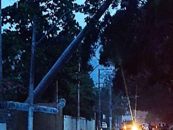 Vendaval derruba palmeira em Cachoeiro de Itapemirim . Crédito: Leitor| A Gazeta