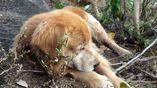 Resgate de cachorros mobilizou equipe de voluntários em Domingos Martins
